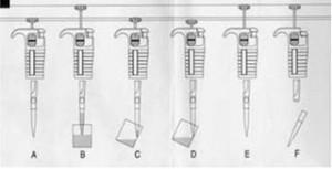 Técnica para el uso de las micropipetas