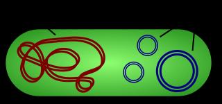 Plásmido bacteriano