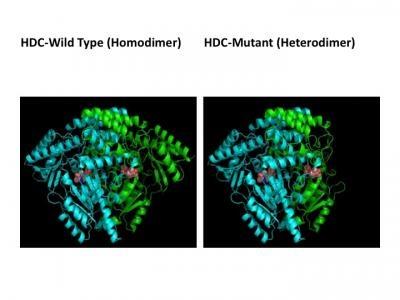 Estructuras proteínicas de las variantes del síndrome de Tourette