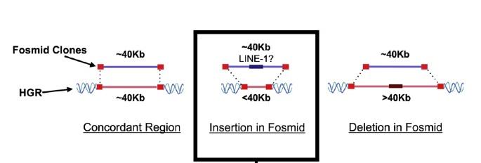 utilización de los fósmidos y los retrotransposones