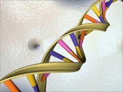 Doble hélice de ADN