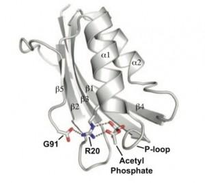 Dibujo esquemático de la acetilfosfatasa