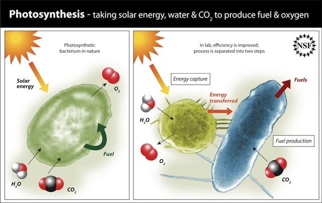 Esquema de proceso fotosintético canalizado