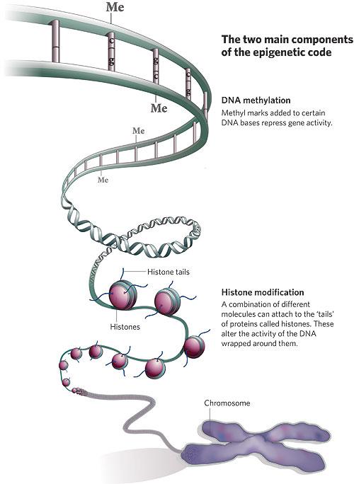 Tipos de cambios epigenéticos