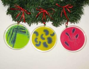 Varias placas de petri con cultivos de microorganismos coloristas a modo de adorno navideño.