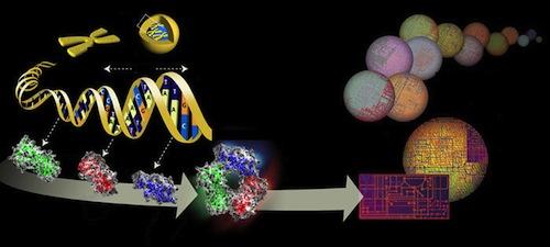 Infografía de la estructura 3D del genoma