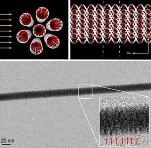 Imagen de la colocación de las siete dobles hélices de ADN (parte superior) y la imagen obtenida mediante microscopía de transmisión de electrones (parte inferior).