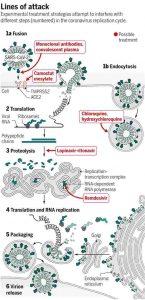 Ciclo infeccioso a nivel celular del SARS-CoV-2 con los posibles compuestos para tratar de parar el avance del virus.